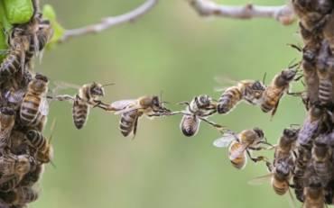 """Quiz """"Giornata mondiale delle api"""""""